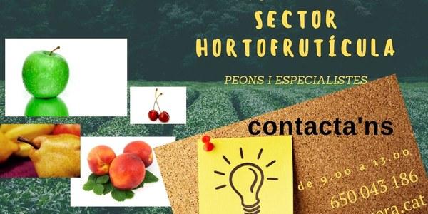 Oferta de feina de peó i especialista al sector hortofuctícola